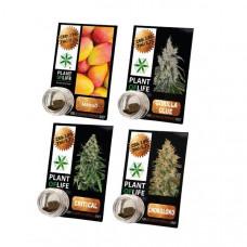Plant Of Life CBD Hash 1g 3.8% - Flavour: Amnesia