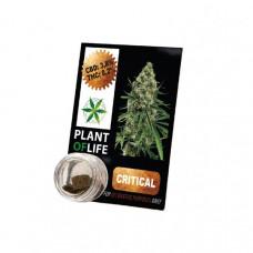 Plant Of Life CBD Hash 1g 3.8% - Flavour: Critical