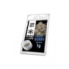 CBD Hash 1g Blue Berry 10%