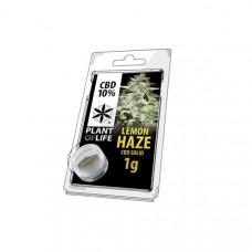 CBD Hash 1g Lemon Haze 10%